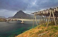 Fish. Dried fish in Lofoten Islands stock photos