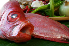 Fish. Fresh fish with spices being prepared for cooking royalty free stock images