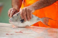 Fish. Sea fish in hands of fisherman, closeup Stock Images