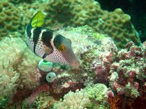 Fish. At a coral reef Stock Images