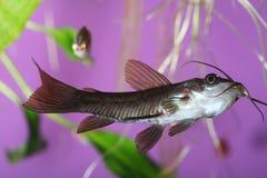 Fish. Fantastic exotic fish in aquarium natural lighting Stock Photos