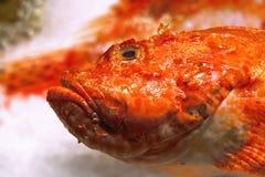 Free Fish Royalty Free Stock Photography - 2566507