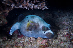 Fish. In the night under water Stock Image