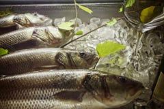 Fish. Fresh fish in the ice. horizontal photo Stock Images