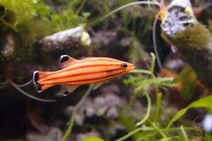 Fish. Beautiful color fish in the tropical aquarium Royalty Free Stock Images