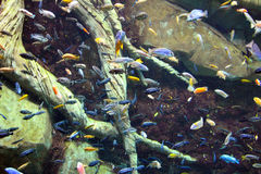 Fish!. A variety of small fish swimming in an aquarium Royalty Free Stock Photography