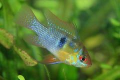 Fish. The exotic fish in aquarium, natural lighting Stock Photos