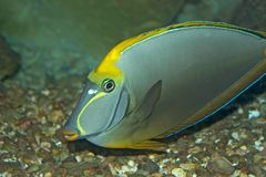Fish. Of the Red Sea Stock Images