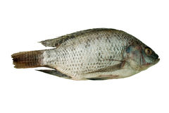 Fish. Raw fish. Whole tilapia on white background Stock Photo