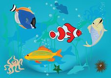 Fish. Happy fish in blue water Stock Photography