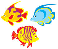 Fish. Vector clipart / illustration for your design and scrapbook Stock Photos