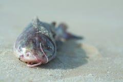 Fish. On the beach. Nouakchott stock photography