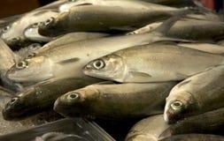 Fish. Fresh fish Stock Photo