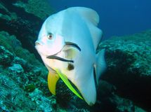 Fish. Picture taken while diving underwater Royalty Free Stock Images