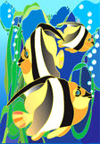 Fish. Aquarian small fishes.Tropical small fishes Royalty Free Stock Photography