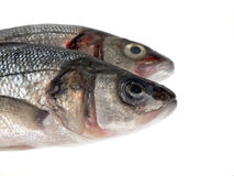 Fish. A sea bass on white Royalty Free Stock Images