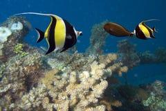 Free Fish Royalty Free Stock Photo - 5310225