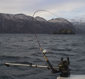 Fish on. A fish on the line off Kodiak Island stock image