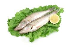 Fish Stock Photography