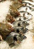 Fish. On sale stockholm market Royalty Free Stock Images