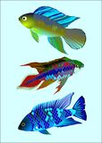 Fish. Three fish on blue background stock illustration