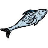 Fish. Illustration Stock Photo
