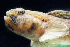 Fish. Decorative fish in aquarium Stock Photo