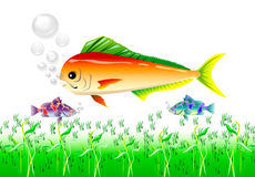 Fish. Colour aquarium fishes Under the water bubbles and grass illustration Royalty Free Stock Photos