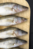 Fish. Es in a row on wooden board Royalty Free Stock Photo