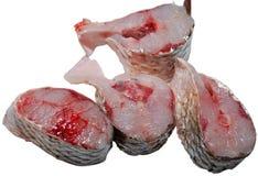 Fish. Fresh fish isolated on white Stock Images