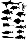 Fish. Black silhouette fish on white background Royalty Free Stock Photography