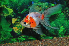 Free Fish Stock Images - 9348454