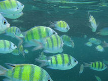 Fish. (underwater photo by scuba diving Royalty Free Stock Photo