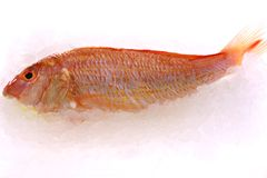 Fish. Red fresh fish on ice Royalty Free Stock Images