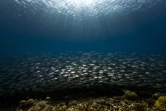 Fish above coral reef Royalty Free Stock Photography