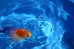 Fish abstract Stock Images