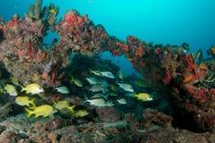 Fish Aggregation Stock Photo