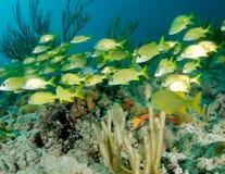 Fish Aggregation Royalty Free Stock Image