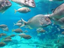 Fish school aquarium Stock Photos