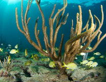 Fish Aggregation over coral reef Stock Photography