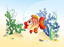 Fish in the algae. Fish swim among the seaweed and sea stones Stock Images