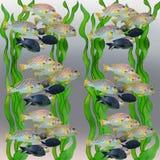 Abstract aquarium background. Fish in algae. Abstract aquarium background Stock Photography