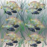 Abstract aquarium background. Fish in algae. Abstract aquarium background Royalty Free Stock Image
