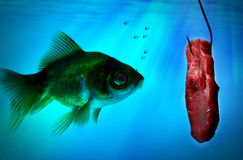 Fish alone in the dark water Royalty Free Stock Images