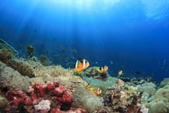 Free Fish And Coral Reef Royalty Free Stock Images - 35828119