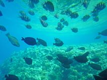 Free Fish And Corals In The Sea Royalty Free Stock Photos - 40119308