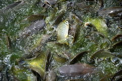Fish. Are animals that live in the water. As cold-blooded animals Breathe with gills and a spine Can move with fins and muscles of the body. Some scales Stock Image