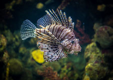 Fish in aqarium Royalty Free Stock Image