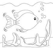 Fish in aquarium. Fish swimming in the aquarium. Black & white cartoon sketch for coloring books for kids Stock Photography