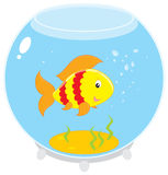 Fish in an aquarium. Vector clip-art of a yellow and red striped fish swimming in a round aquarium Royalty Free Stock Photo